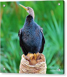 Acrylic Print featuring the photograph My New Friend by William Wyckoff