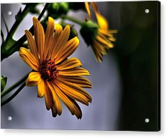 My Only Sunshine Acrylic Print