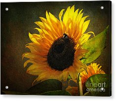 Acrylic Print featuring the digital art ...my Only Sunshine by Lianne Schneider