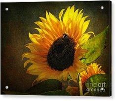 ...my Only Sunshine Acrylic Print by Lianne Schneider