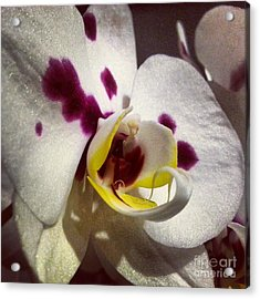 My Orchid Acrylic Print by Heather L Wright