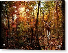 My Place Acrylic Print by Bill Stephens