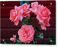 My Rose Garden Acrylic Print by Victoria Sheldon