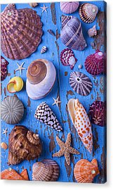 My Shell Collection Acrylic Print by Garry Gay