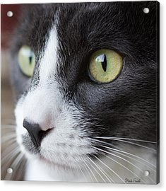 Acrylic Print featuring the photograph My Sweet Boy by Heidi Smith