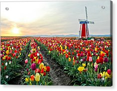 My Touch Of Holland 2 Acrylic Print by Nick  Boren