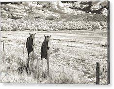 My Two Friends Acrylic Print by Jon Glaser