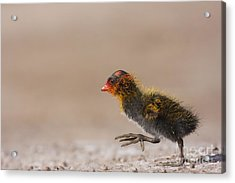 My What Big Feet You Have Acrylic Print by Ruth Jolly