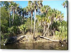 Acrylic Print featuring the photograph Myakka River by John Mathews