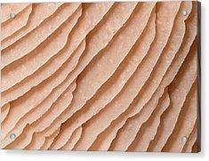 Mycena Fungus Gills Abstract Acrylic Print