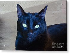 Mysterious Black Cat Acrylic Print by Luther Fine Art