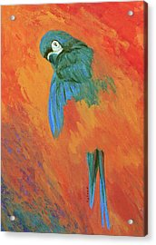 Acrylic Print featuring the painting Mysterious Macaw by Margaret Saheed