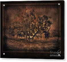Mysterious Mesquite Acrylic Print