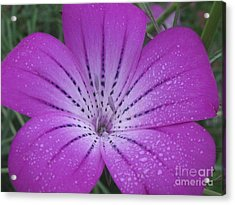 Mysterious Photography Acrylic Print by Tina Marie