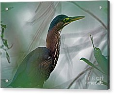 Mystery In The Marsh Acrylic Print by Inspired Nature Photography Fine Art Photography