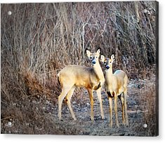 Mystic Duo Acrylic Print by Marty Koch