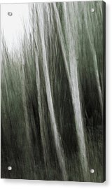 Mystic Forest Acrylic Print by Kim Lessel