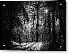 Mystic Forest Acrylic Print by Marina Likholat