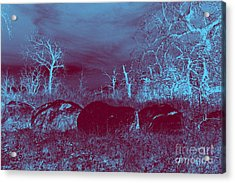Mystic Forest Acrylic Print by Mickey Harkins