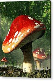 Mystic Mushroom Acrylic Print by Daniel Eskridge