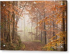 Mystic Woods Acrylic Print by Anne Gilbert