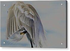 Mystical Egret Acrylic Print