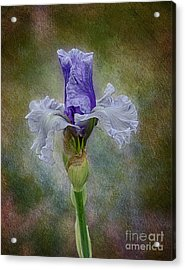 Acrylic Print featuring the photograph Mystical Iris by Vicki DeVico