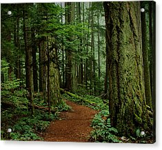 Mystical Path Acrylic Print by Randy Hall