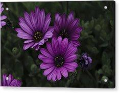 Mystical Purple Acrylic Print by Penny Lisowski