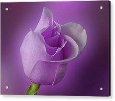 Mystical Purple Rose Acrylic Print by Sandy Keeton