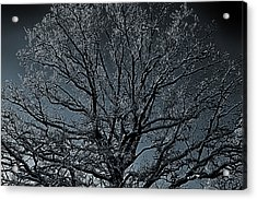 Mystical Tree Acrylic Print