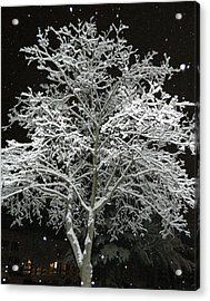 Mystical Winter Beauty Acrylic Print
