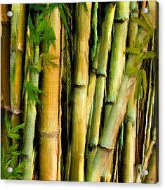 Mystique Beauty- Bamboo Artwork Acrylic Print