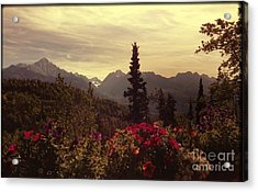 Acrylic Print featuring the photograph Nadine's View by J Ferwerda