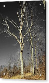 Acrylic Print featuring the photograph Naked Branches by Linda Segerson