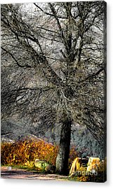 Naked For The Winter Acrylic Print