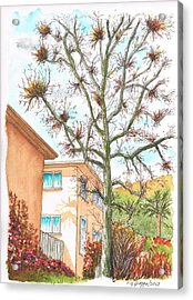 Naked Tree In Laurel And Selma Avenue, West Hollywood, California Acrylic Print by Carlos G Groppa