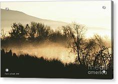Naked Trees 2 Acrylic Print