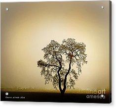 Naked Trees 4 Acrylic Print
