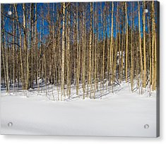 Acrylic Print featuring the photograph Naked Wilderness by Mike Lee