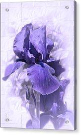Nancy Acrylic Print by Elaine Teague