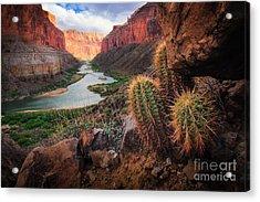 Nankoweap Cactus Acrylic Print by Inge Johnsson