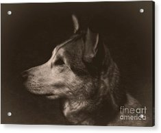 Acrylic Print featuring the photograph Nanuk Of The North by Marjorie Imbeau