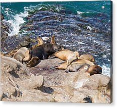 Nap Time Acrylic Print by Dale Nelson