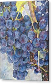 Napa Grapes 1 Acrylic Print