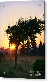 Acrylic Print featuring the photograph Napa Moment by Ellen Cotton