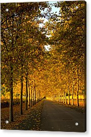Napa Valley Fall Acrylic Print