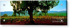 Acrylic Print featuring the photograph Napa Valley Ingenook Winery Roadside by Tom Jelen