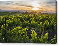 Napa Valley Sunset  Acrylic Print