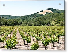 Napa Vineyard With Hills Acrylic Print by Shane Kelly
